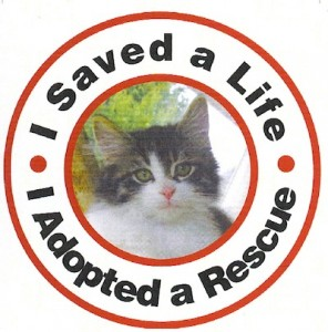 magnet-cat