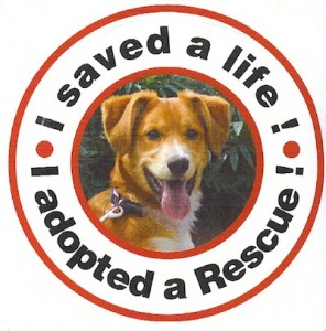 magnet-dog